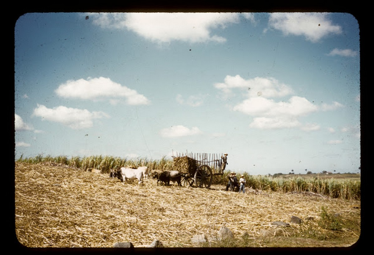 everyday_life_of_cuba_in_the_1950s_2813_29.jpg
