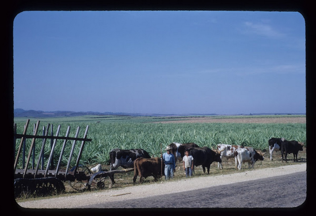 everyday_life_of_cuba_in_the_1950s_2814_29.jpg