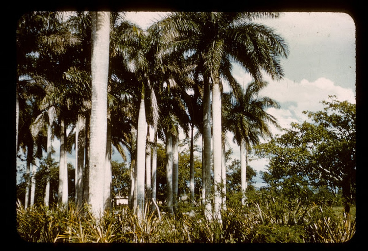 everyday_life_of_cuba_in_the_1950s_2817_29.jpg
