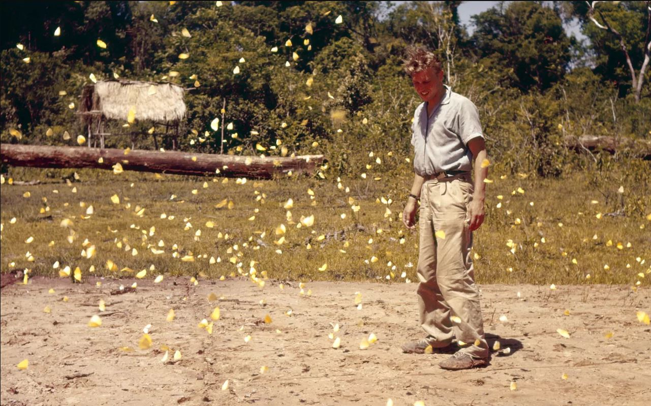 a_young_david_attenborough_in_a_cloud_of_butterflies_in_paraguay_1959.jpeg