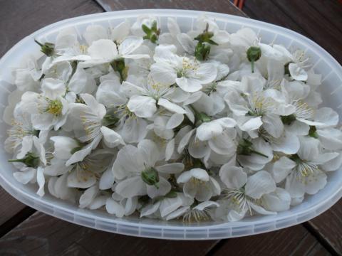 cseresznyevirág1_480x360.jpg