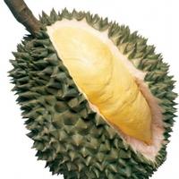 Könnyes búcsú, bye bye Big Durian