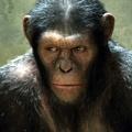 Ave Caesar! – A majmok bolygója: Lázadás (visszatekintő)