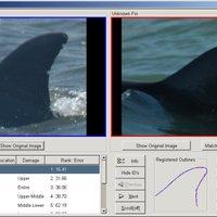 DARWIN, a delfinfelismerő