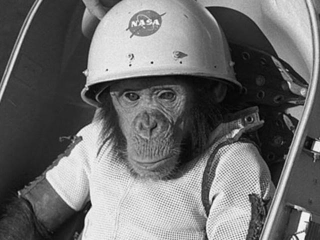 Ham az asztrocsimpánz