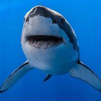 Napi tudomány: a cápák csipázzák a metalt, a cicák klasszikusra lazulnak szívesen