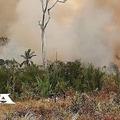 Ötezer fát ültet Brazíliában a Wacken Open Air... És még több várható!