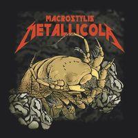 Mi a rák az a Metallica? - Mélytengeri állatot neveztek el a thrash metal zenekarról
