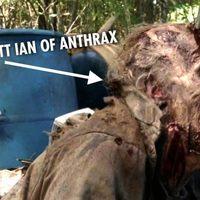 Csúnya véget ért zombiként Scott Ian az Anthrax gitárosa
