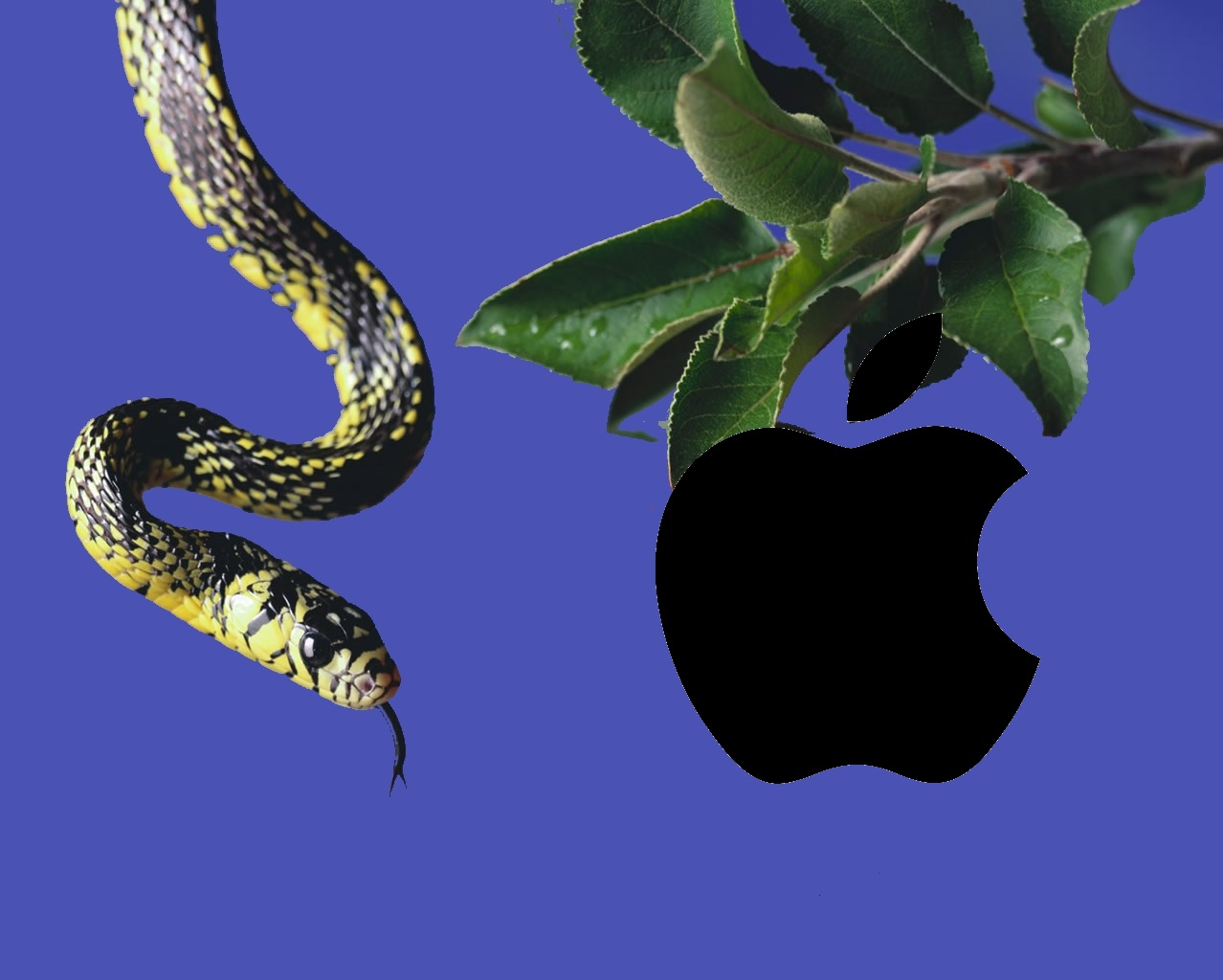 apple-and-snake_1280x1024_2988.jpg