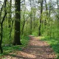 Az erdő titkai