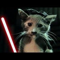Jedi cicus