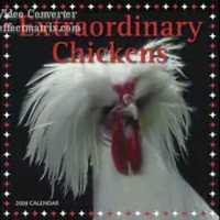 Csirke remix