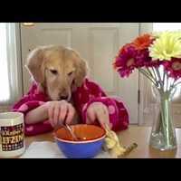 Egy kutya reggelije