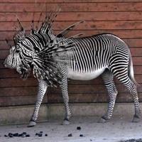Érdekes állatok