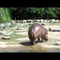 Eközben az állatkertben