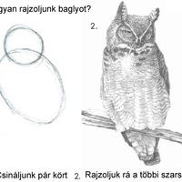 Hogyan rajzoljunk baglyot?