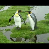 Nagyon alapos pingvinek