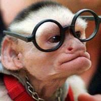 Hogy fedezzen benneteket egy taliga tarka majom!
