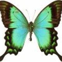 Pillangóvarázs