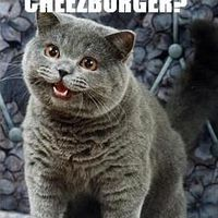 i can has a cheezburger