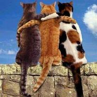 Macska, jaj!