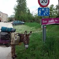 Az erőszaktevő meleg szamár esete Bohumil Hraballal  //  Bohumil Hrabal's case with the rapist gay donkey