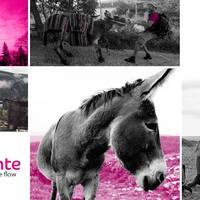 El Camino februárban {12.rész} [Befejezés]  /  El Camino in February {Pt.12.} [The End]