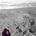 El Camino februárban {9.rész} / El Camino in February {Pt.9.}
