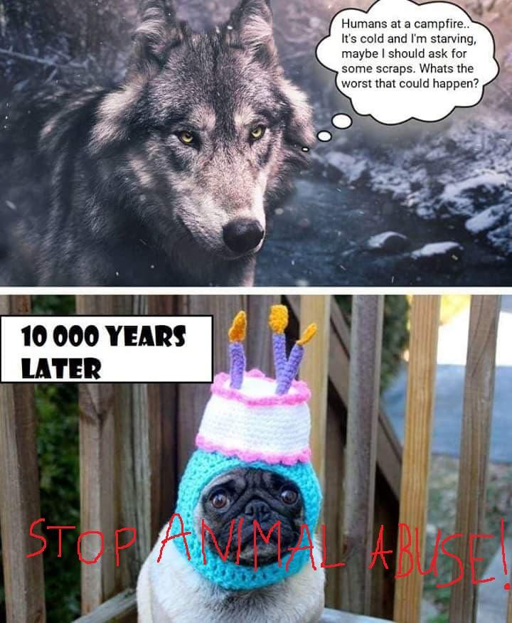 wolf_mops_b_1.jpg