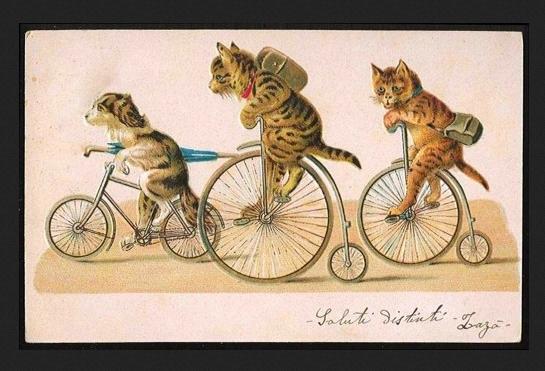 kitty on a bike.jpg