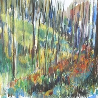 Somhegyi erdő