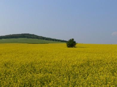 Sárga, zöld, kék, 2007