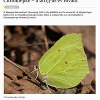2013 év rovara, a National Geographic oldalain