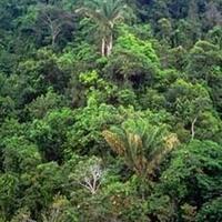 A brazil esőerdők rovar világa