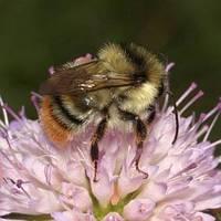 A méhek fejlődése I.