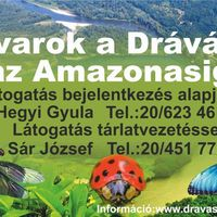 Rovarok a Drávától az Amazonasig