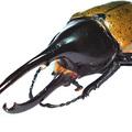 Kétújfalui Rovarház - Trópusi rovarok kiállítása: 2011. augusztus 12-14.