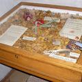 Az év rovara a Bakonyi Természettudományi Múzeumban
