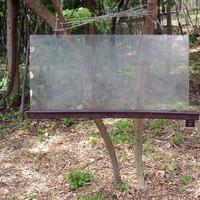Pintér-kert arborétum rovarászati feltárása