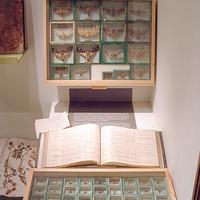 ÉSZ-LELETEK - Természetrajz a XIX. században