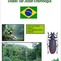 A Brazíl esőerdők világa