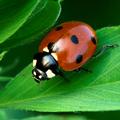 Mostantól: Az év rovarát is kijelölik