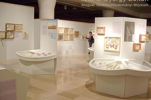 Magyar Természettudományi Múzeum: Hatlábúak birodalma rovarkiállítás 8. kép