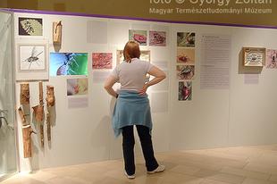 Magyar Természettudományi Múzeum: Hatlábúak birodalma rovarkiállítás 24. kép