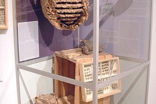 Magyar Természettudományi Múzeum: Hatlábúak birodalma rovarkiállítás 18. kép
