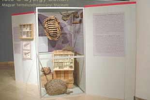Magyar Természettudományi Múzeum: Hatlábúak birodalma rovarkiállítás 28. kép
