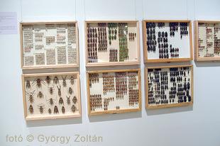 Magyar Természettudományi Múzeum: Hatlábúak birodalma rovarkiállítás 5.