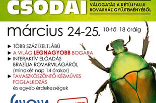 A Trópusok Rovarcsodái, válogatás a kétújfalui rovarház gyűjteményéből
