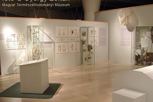 Magyar Természettudományi Múzeum: Hatlábúak birodalma rovarkiállítás 22. kép